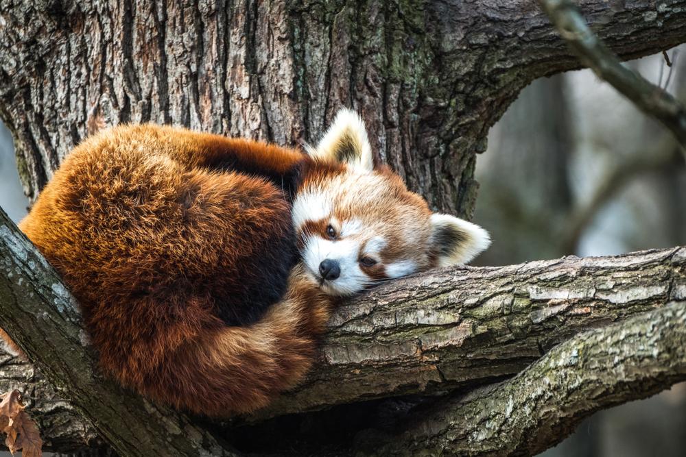 Aktualisiere Firefox jetzt, um diese Zero-Day-Lücke zu schließen