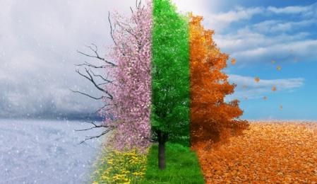 Baum mit allen vier Jahreszeiten zeitgleich