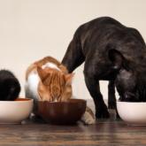 Branchenlösungen Tiernahrung