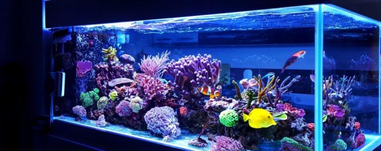 Online Marketing für Aquarien-Shops