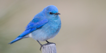 Twitter testet neue iOS App Icons