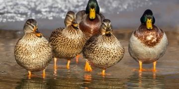 DuckDuckGo mit 30 Millionen Suchanfragen täglich