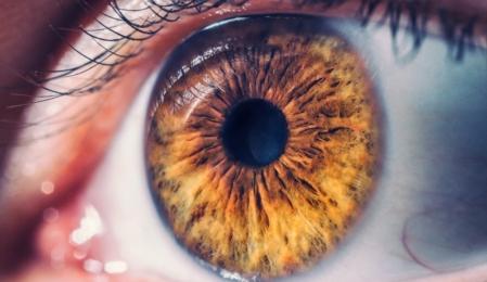 Google Ki Retina Herzerkrankungen